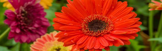 Blog_Flowersheader_img