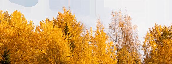 الموسمية-الخلفية-الخريف